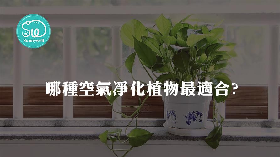 哪種室內植物最適合凈化空氣?